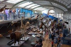 Le museum d'histoire naturelle